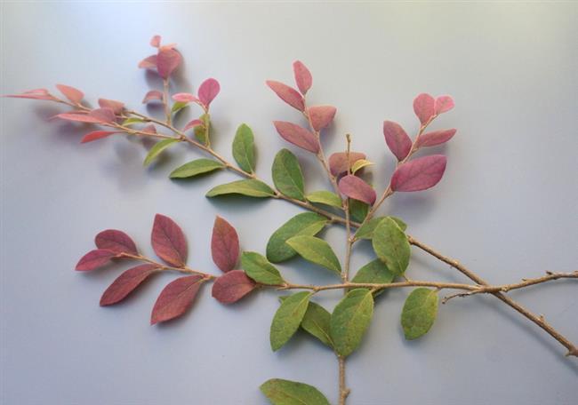 Украшение интерьера ветвями живых растений.