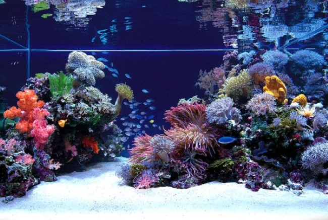Стильный аквариум, встроенный в стену гостиной.